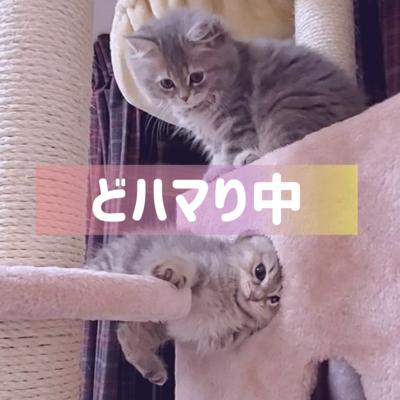 子猫catグッズ
