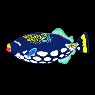 海の生き物