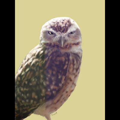 アナホリフクロウ