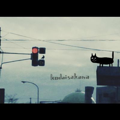 カラスと信号機と黒猫