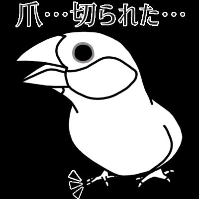 爪を切られてボーゼンとする文鳥