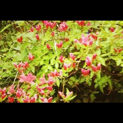 帰り道のお花