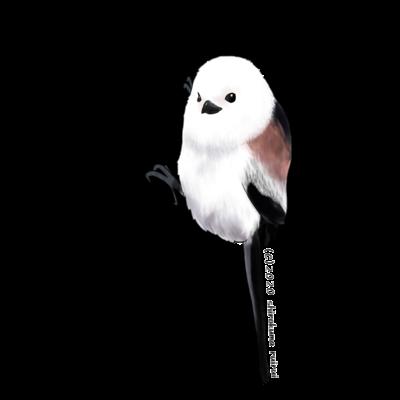鳥類/雑貨