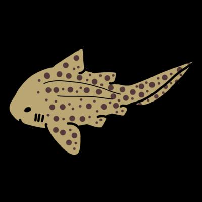 トラフザメ