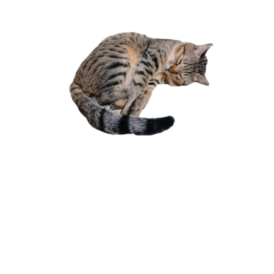 【愛猫R】series