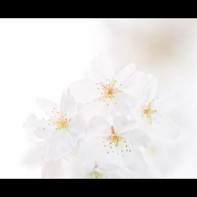 「花」 中判フィルム写真 スマホケース