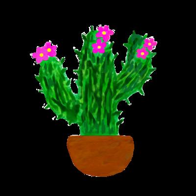 サボテン ピンクのお花