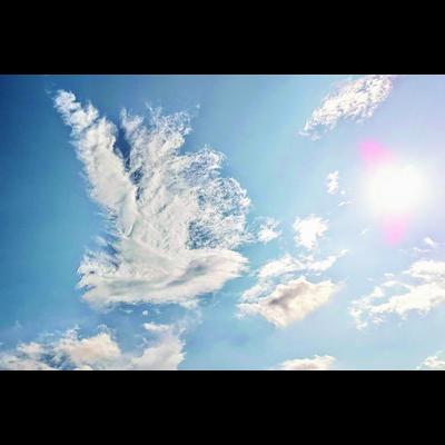 純白の鳳凰と太陽
