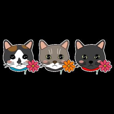 3匹の猫【かりん・まろん・じげん】
