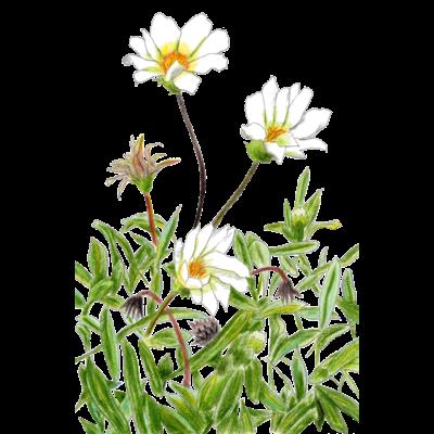 花咲く小径①いろどり