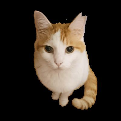 猫ジップパーカー