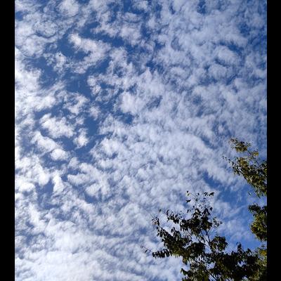 いわし雲photo