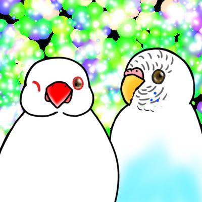 白文鳥とセキセイさん