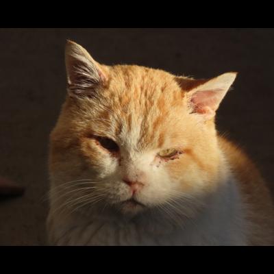 Queen_Cat