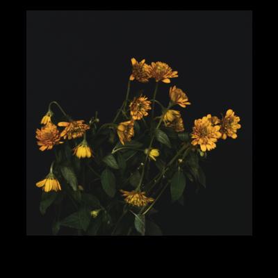 Matte Flower 01