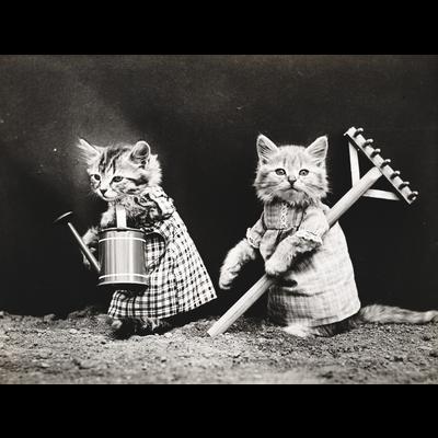 ヴィンテージ猫