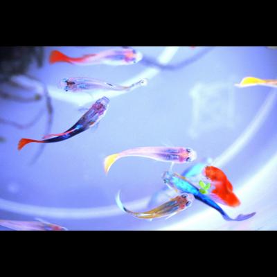 魚_アクリルブロック
