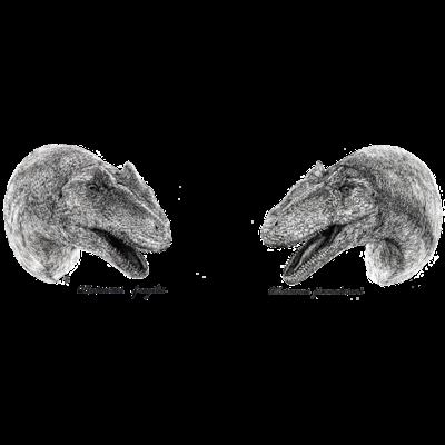 Alloseurus二種