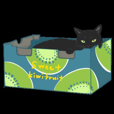 ダンボール黒猫