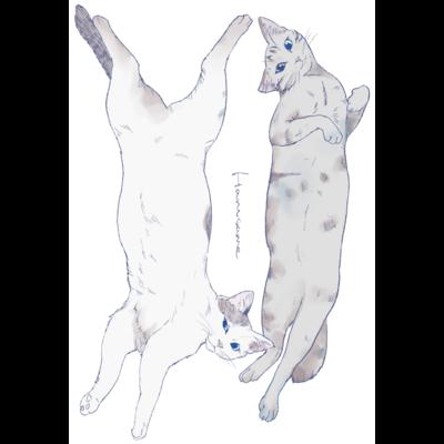 長い猫ダブル