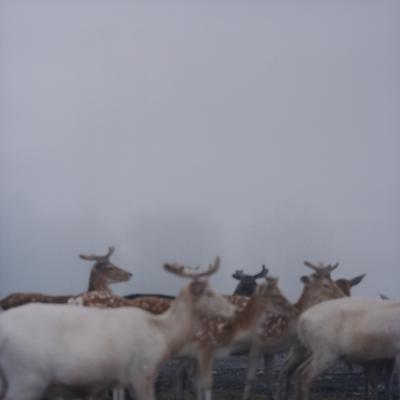 Fog and deer Ⅰ