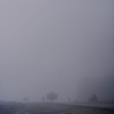 Fog and animals