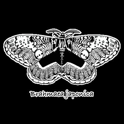 Brahmaea japonica