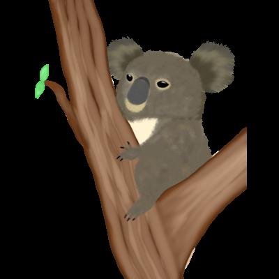 コアラ 抱っコアラ
