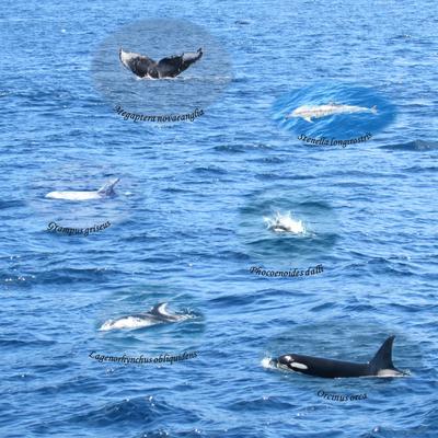 船上から見た鯨類(1)