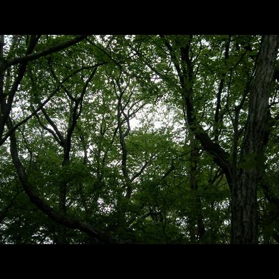 迷える深緑