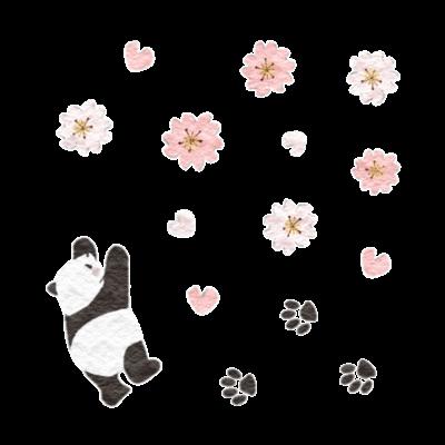 桜咲くパンダ