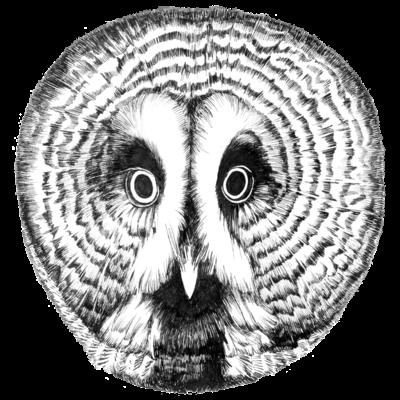 カラフトフクロウ(お顔)