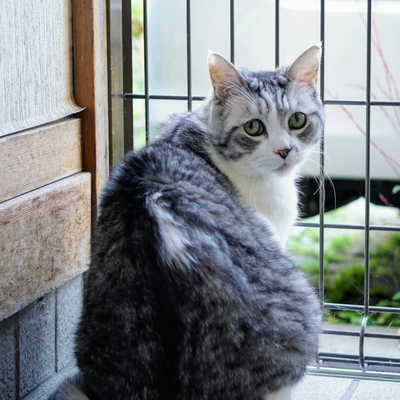 飼い猫小次郎くん(収益の一部はえさ代になります)