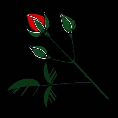 ゾウムシ薔薇蕾
