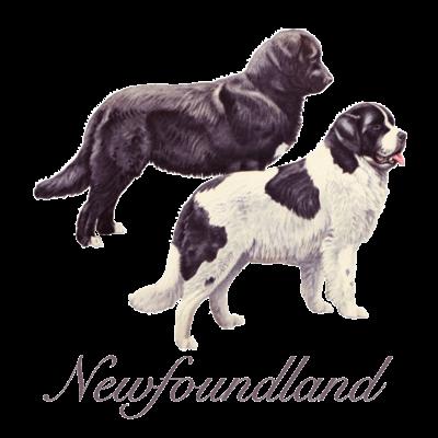 ニューファン Newfoundland