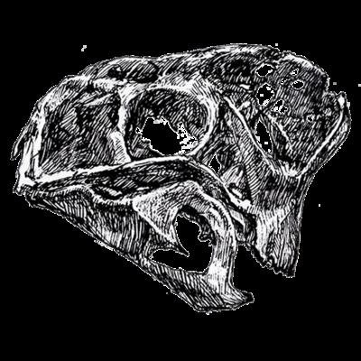 頭の骨たち