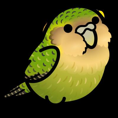 Chubby Bird フクロウオウム カカポ