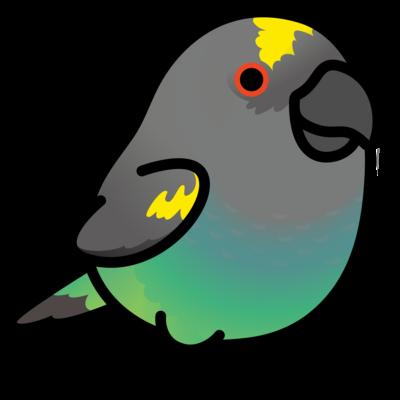 Chubby Bird ムラクモインコ