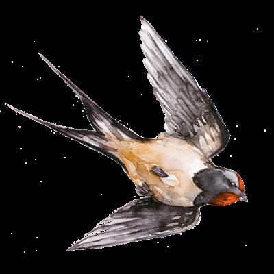 Birdシリーズ
