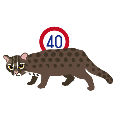 絵柄:KEEP40IRIOMOTE