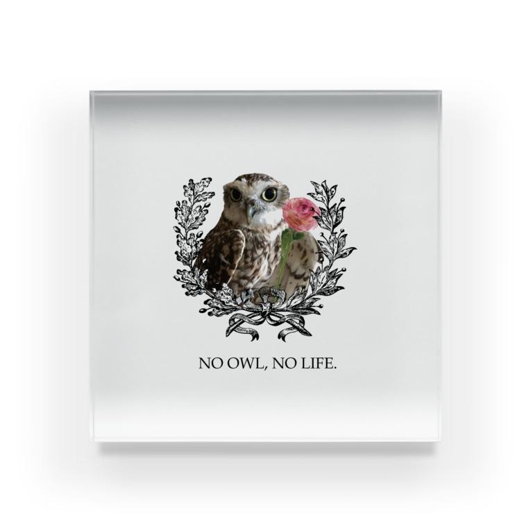 Pulmo(プルモ)のNO OWL, NO LIFE. Acrylic Block