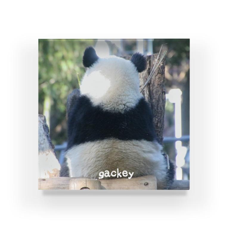 gackeyのシャンシャンメモリーⅠ Acrylic Block