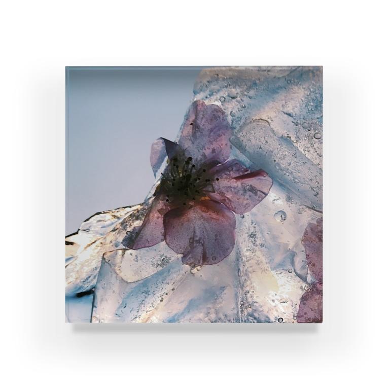 yoiitoの春氷のカケラ(桜) Acrylic Block