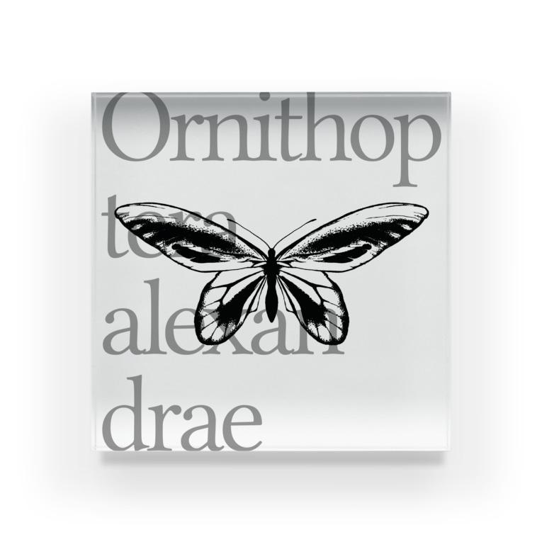 NEROのOrnithoptera alexandrae Acrylic Block