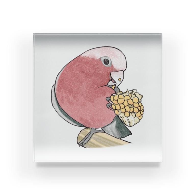 まめるりはことりのモモイロインコちゃんとトウモロコシ【まめるりはことり】 Acrylic Block
