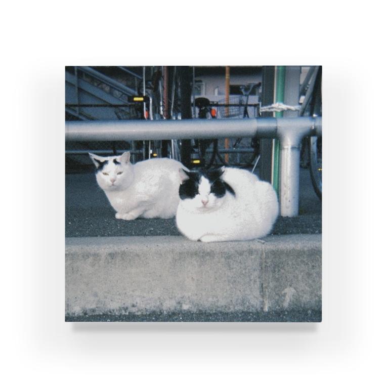 ka_nonの駅の駐輪場のネコちゃん Acrylic Block
