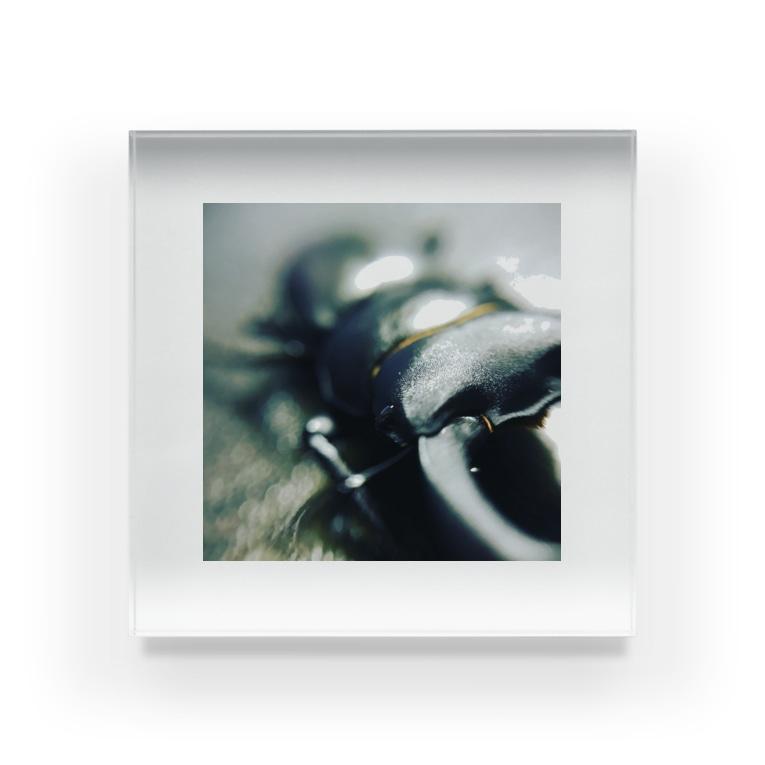 黒と灰色の流線型コクワガタ Acrylic Block