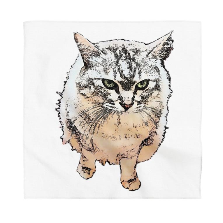 マロマロの丸い猫?? Bandana