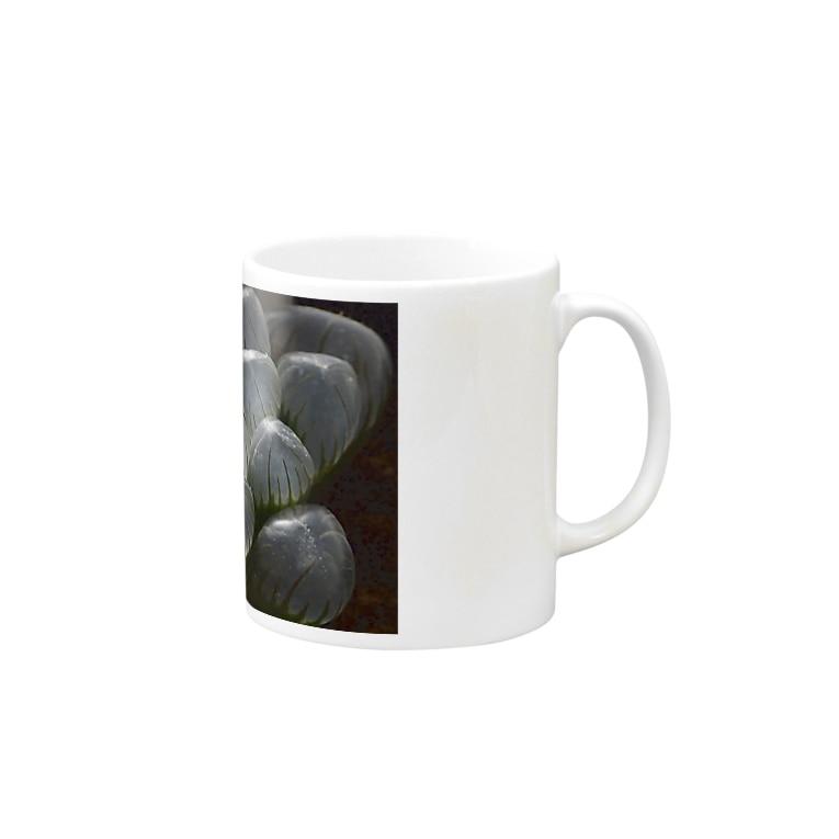 aomatuのハオルチア オブツーサ系4「ドドソン紫オブツーサ」 Mugs