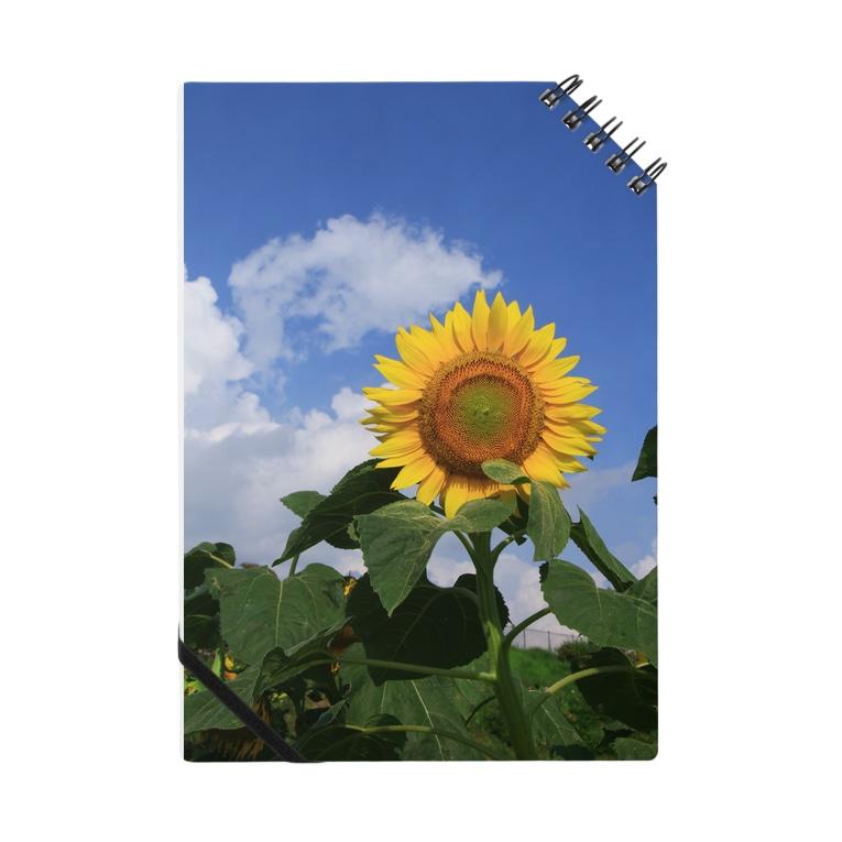 Toshiaki Sakuraiの夏のヒマワリ Notes